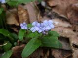 自生する花その1