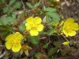 自生する花その3