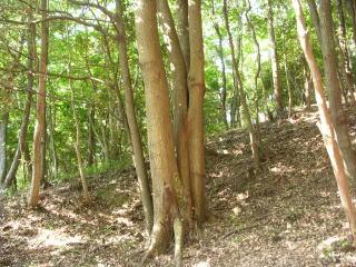 やすらかの森散骨、樹木葬