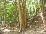 森を守る活動