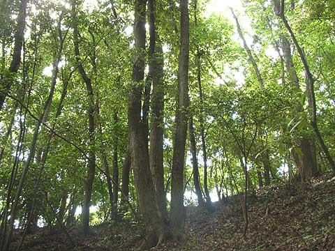 森の代行散骨