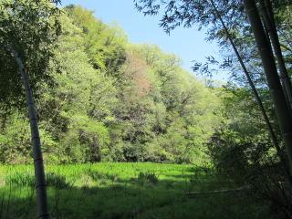 やすらかの森の新緑