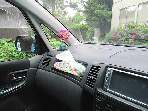 車内にアジサイ