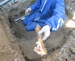 土葬の遺骨