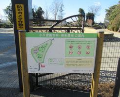 小平霊園-樹木葬