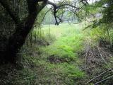お墓にある大木