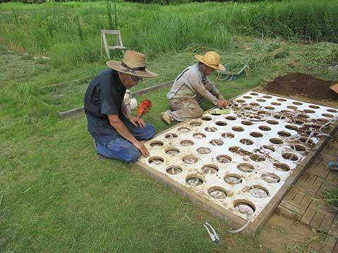 5万円の樹木葬