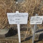 お墓の年間管理料は100年分前納出来るだろうか